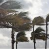 Palm Trees in the wind before a storm arriving